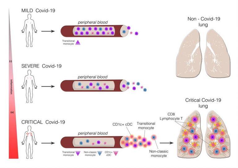 La Covid-19 afecta a diferentes tipos celulares del sistema inmunitario según la severidad con que se manifiesta la enfermedad. Fotografía cedida por la Universidad Autónoma de Madrid.