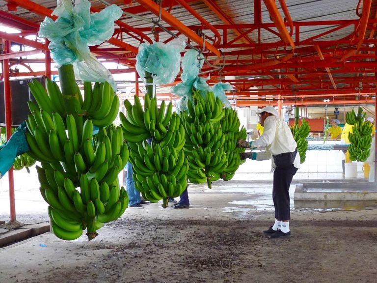 Las actividades económicas a financiar deben contar con una calificación de riesgo ambiental y social bajo y/o moderado. Foto cortesía.