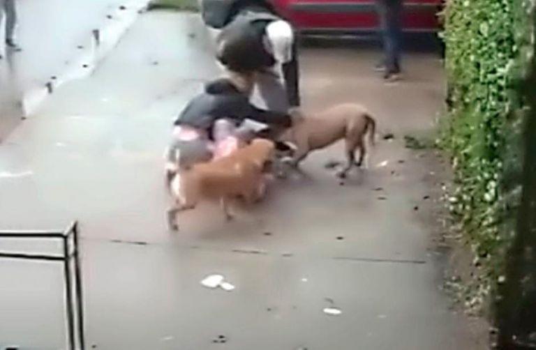 El perro causó una fractura en la pierna de la pequeña, quien fue intervenida de urgencia y no perderá la extremidad.