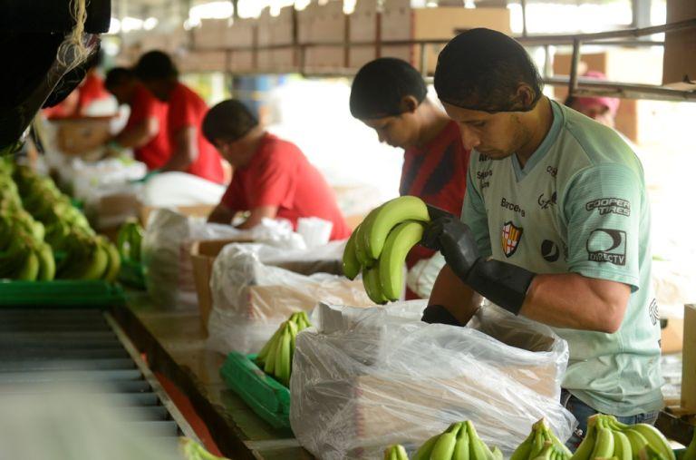 Los pequeños y medianos productores piden que el precio de la caja de banano se fije en 7,05 dólares para el 2021.
