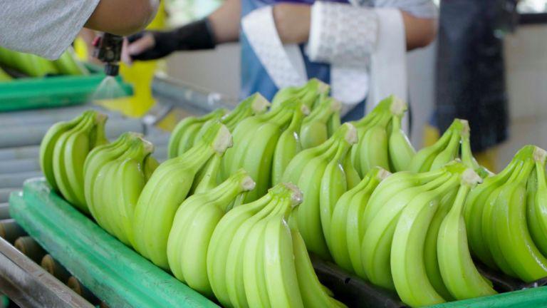 En 2020, las exportaciones de la fruta aumentaron un 7 por ciento en volumen en comparación con el 2019.