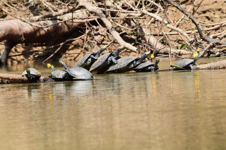 Foto: Ministerio de Ambiente