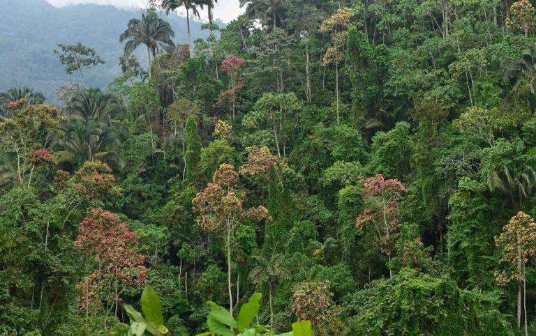 Uruguay vendió bonos de carbono por los bosques que conserva.