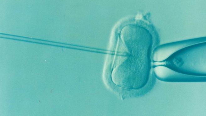No se pondrá límite al número de intentos de inseminación, que podrán efectuarse hasta que la mujer quede embarazada. Foto: Pixabay