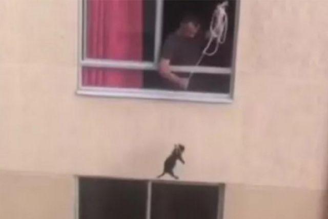 El animalito se balancea y llega al piso, donde no se mueve. El hombre jala de la cuerda y provoca que el pequeño perro se caiga y ruede.