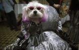 Las mascotas lucieron no solo trajes sino también accesorios. Foto: REUTERS