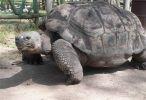 Guayabillas se convirtió en el ecosistema de 28 especies de animales. Foto: Centro de Rescate Animal Guayabillas