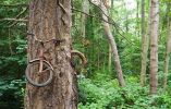 Un árbol engulló una bicicleta en la Isla de Vashon, Washington.