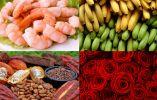 ECUADOR - En Ecuador no sólo se producen bananos. En realidad, existen otros productos ecuatorianos de exportación, como camarón, cacao y flores. (Fotos: RT / youtube / Reuters / flickr / web)