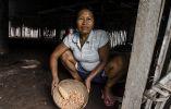 El Përi es un plato a base de plátano maduro y maíz que se prepara en las comunidades secoyas.