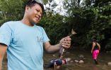 La carachama también es otro de los pescados frecuentes en las comidas de la Amazonía.
