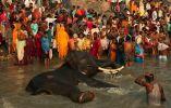 Peregrinos de la India agolpados en el río - Fieles en el río Ganges. Feria de Sonepur, Sonepur (Bihar).