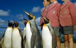 Niños con el uniforme de la escuela posando con pingüinos rey en el zoo de Londres, 1953